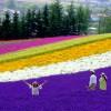 【メロン熊】北海道へ行くならやっぱり7月から9月がいいかも〜AIR DOのトク旅北海道キャンペーン2015