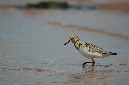 bird leg photo